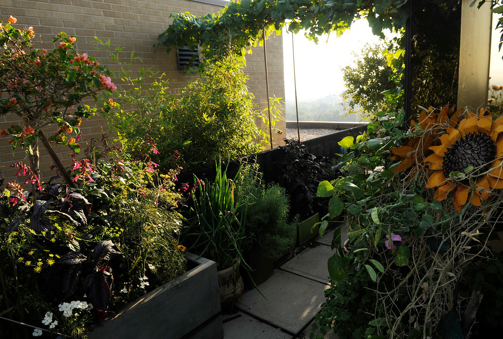 . One of the tricks of Trimpa\'s garden is densely planting the understory of his containers, and going vertical with vining plants. (Cyrus McCrimmon, The Denver Post)