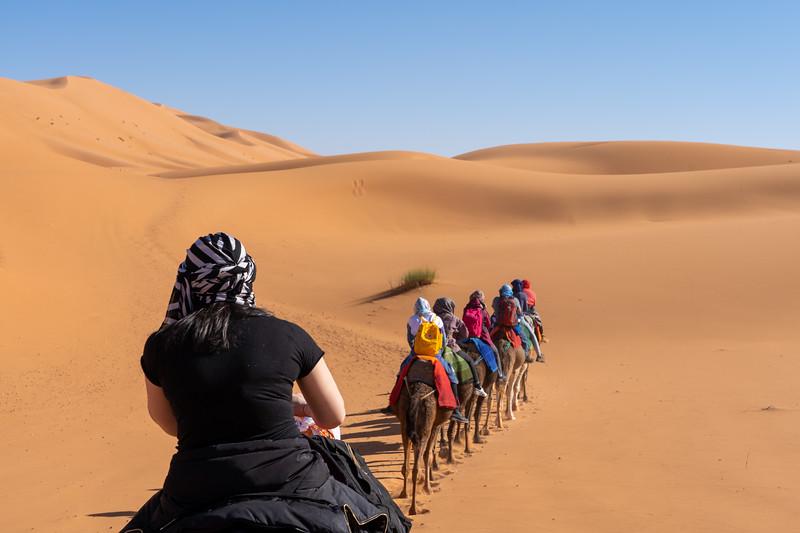 Camel train in the Sahara Desert