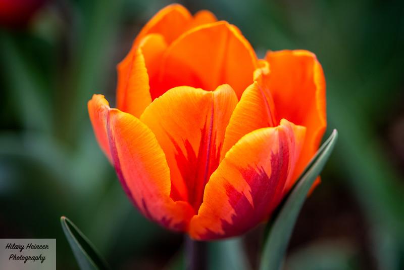 Flowers-15.jpg