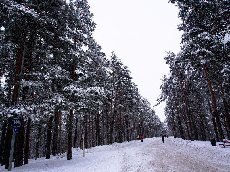 tampere forest.jpg