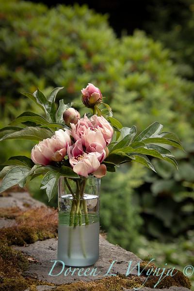 Paeonia x 'RTPIV791-38' Caroline Constabel - Peony cut flowers_1222.jpg