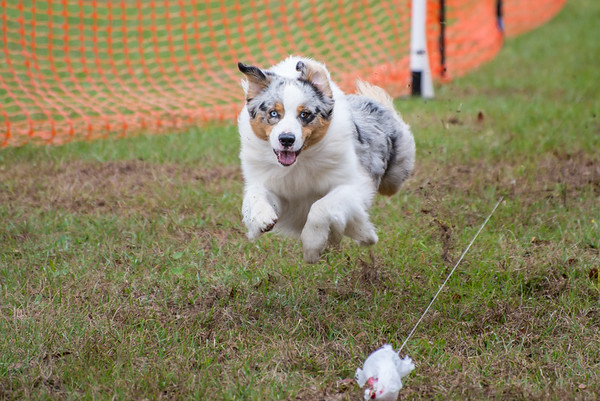 MADTALure Coursing 2017