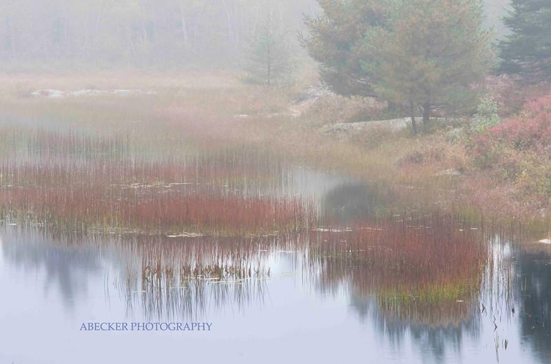 Reflections in a foggy pond copy.jpg