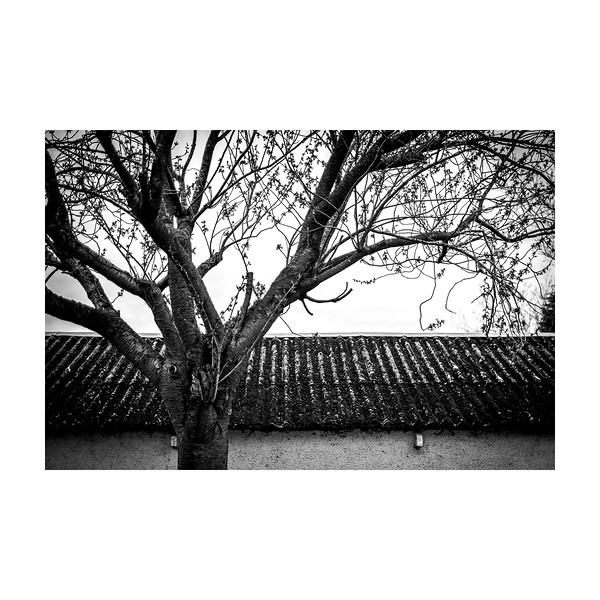 97_Tree_10x10.jpg