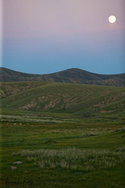 Khustain Nuur, Mongolia.