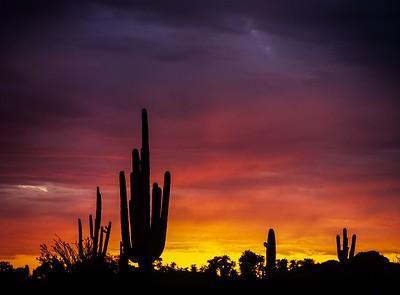 AZ-Saguaro National Park Area