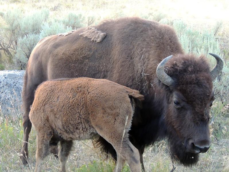 Yellowstone (13).jpg