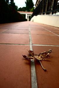 Getty Villa - Fall Leaf