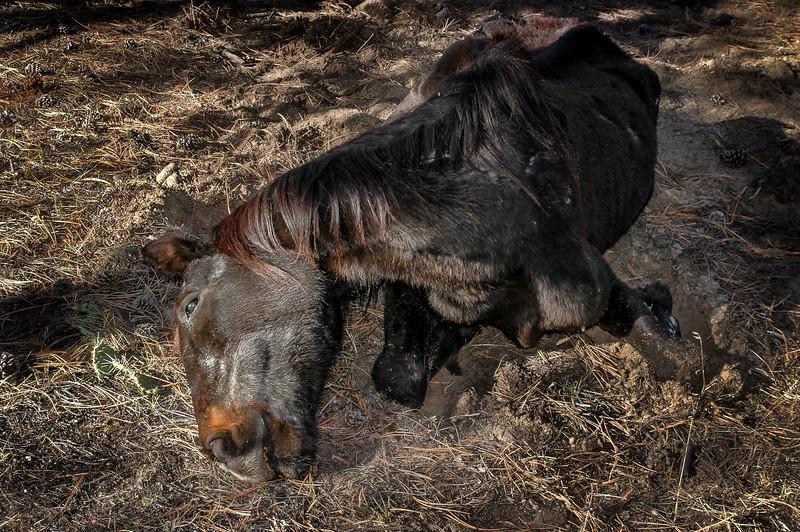 Dead Wild Horse