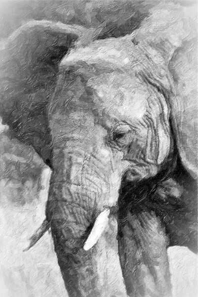 Close up of large elephant with tusks eating tall grass.