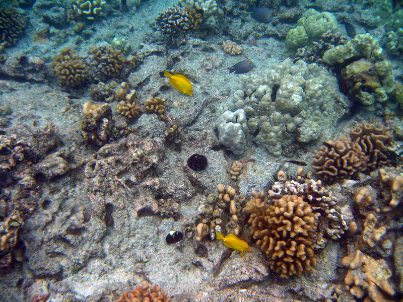 458- 20080416- Hawaii 20-Snorkelling IMG_0642.jpg