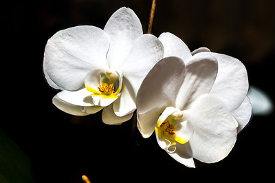 21.04.2014-Orchidee