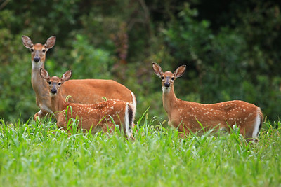 Maryland Wildlife
