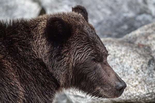 9-23-17 Bella Coola - Perfect's Sibling & Wounded Bear