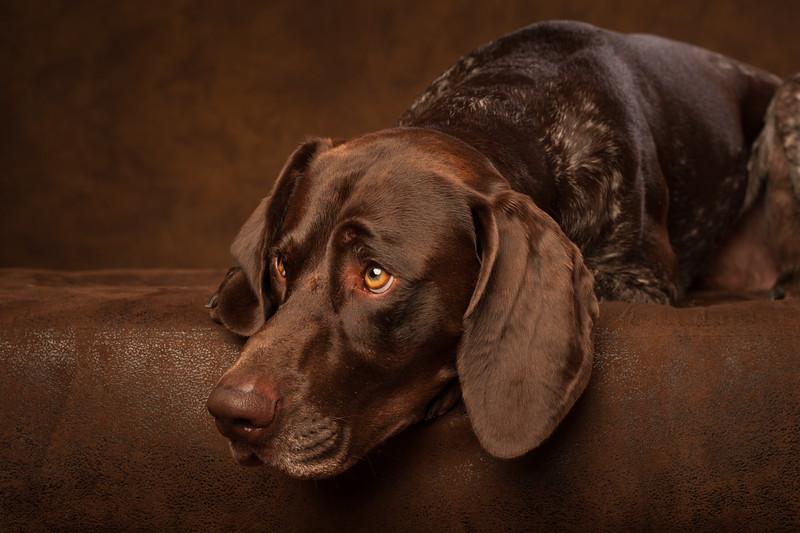 Pets_artfuldog_23.jpg