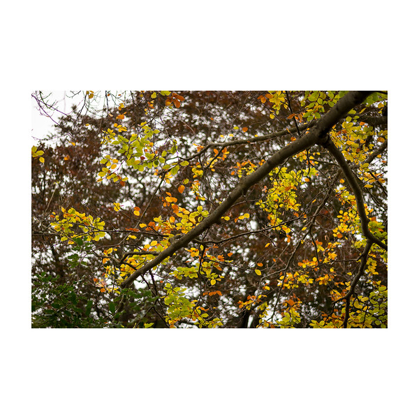 279_AutumnTree_10x10.jpg