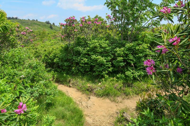 Art Loeb Trail-Grassy Cove Top Summit Spur Junction -- 5,960'