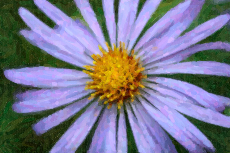 Close up of purple cone flower.