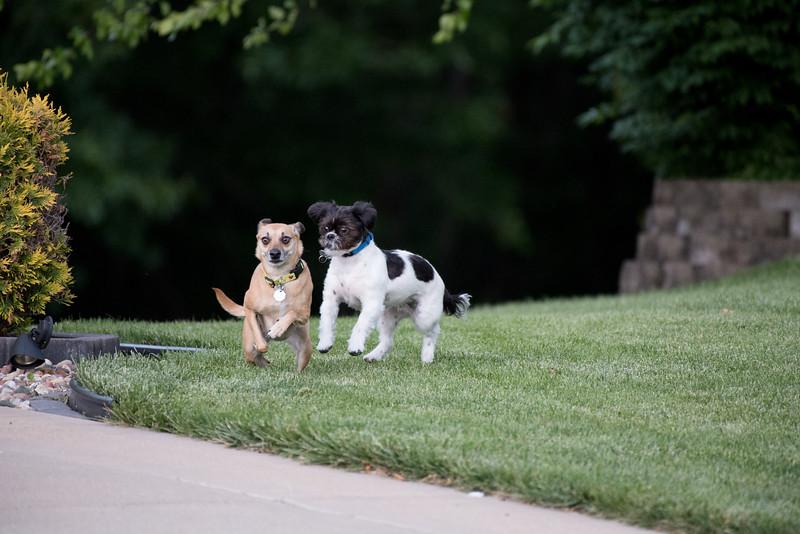LuLu - Brady - Cooper Play Friends (91 of 109).jpg