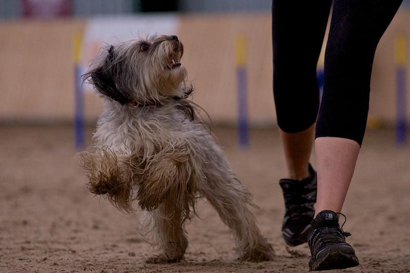 small dog final 1235.jpg