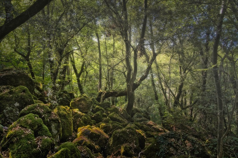 The twist trees