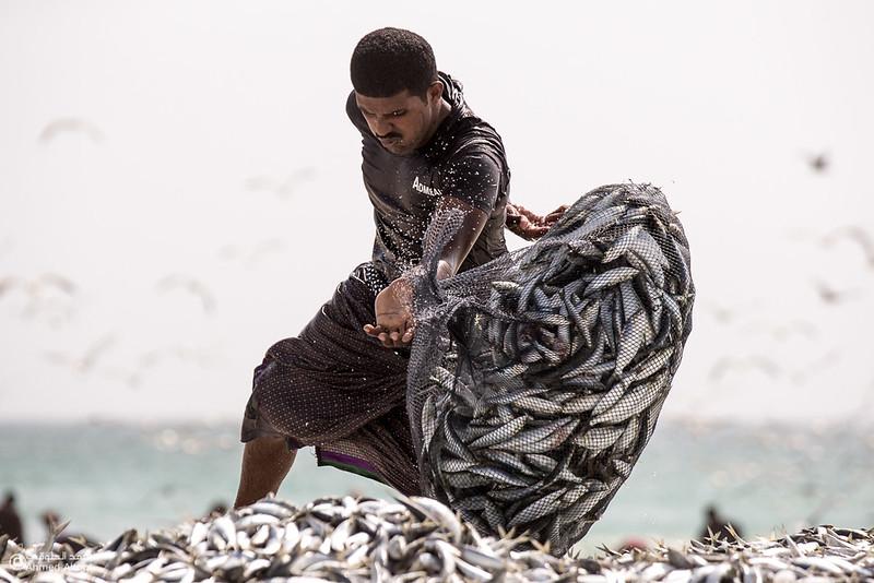 Sardine Season (36)- Dhofar.jpg