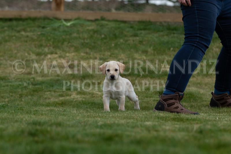Weika Puppies 24 March 2019-6681.jpg