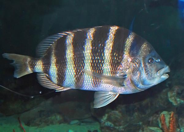 Baltimore Aquarium 2009