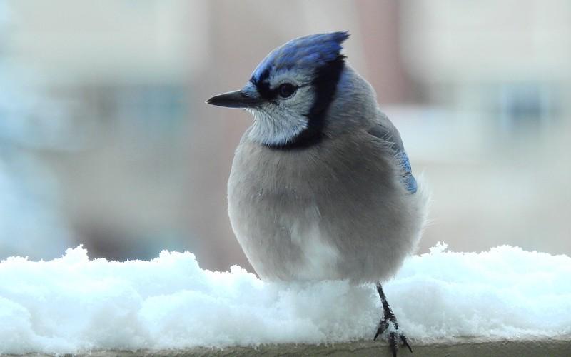 birds (232).JPG