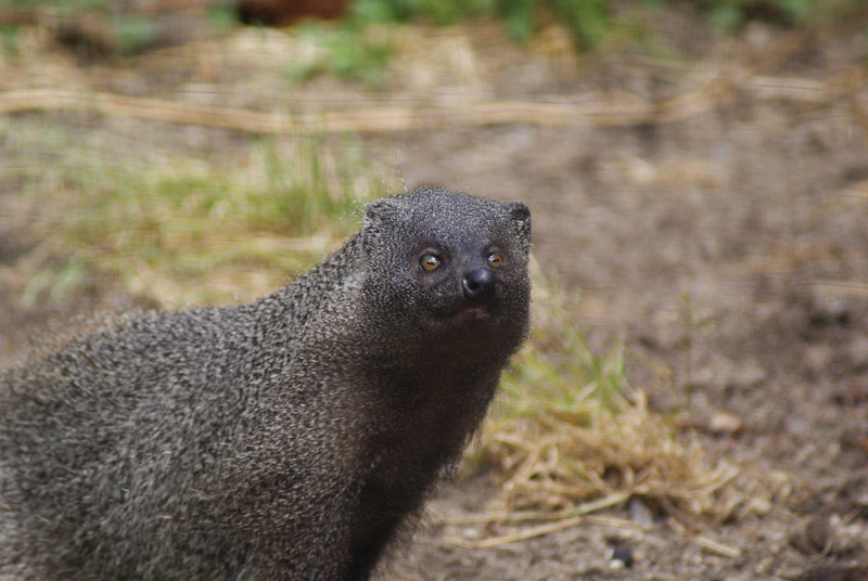 World of Birds (and Mongoose)