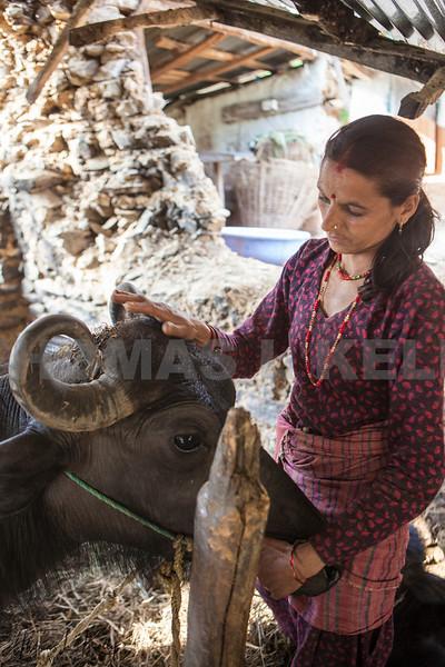 World Vets International Aid  for Animals