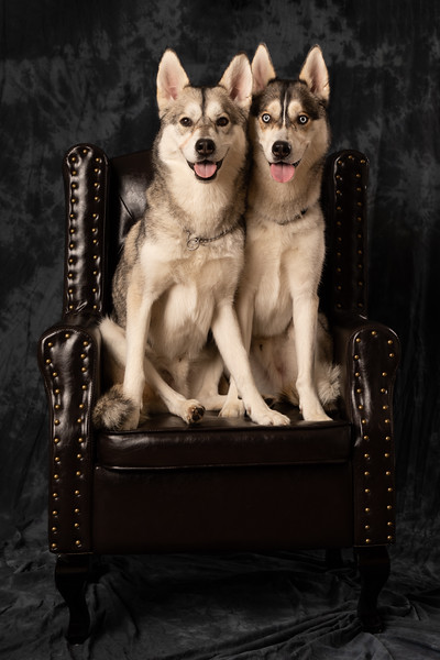 Loki and Scout-945A8809.jpg