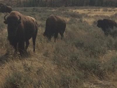 Yellowstone & Billings MT