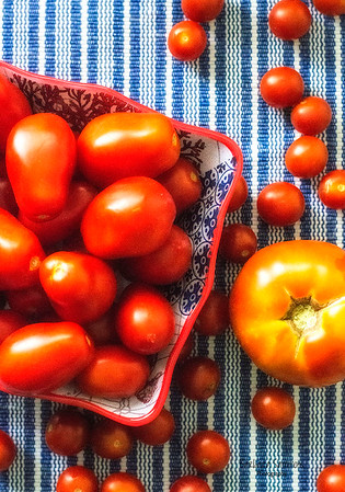 Assortment of Fresh Tomatoes