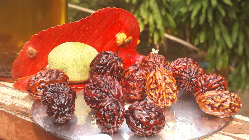 All island representatives set: 21 Rudraksha from 15 trees, soaked in our own invented oil blend