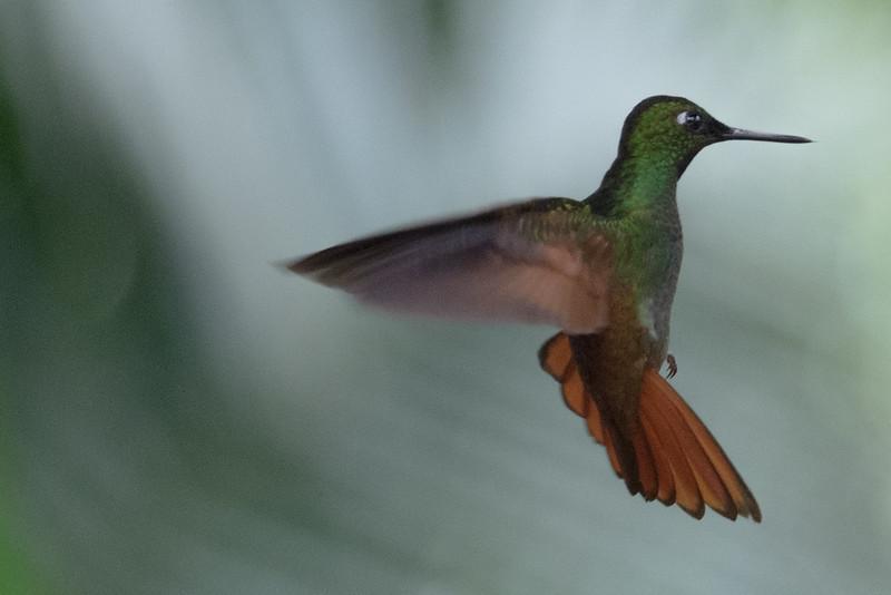19-Sept Brazil Birds-6863.JPG