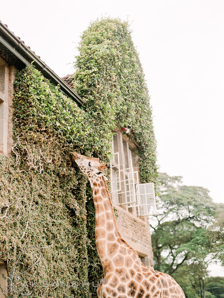 Safari-Africans-153.jpg