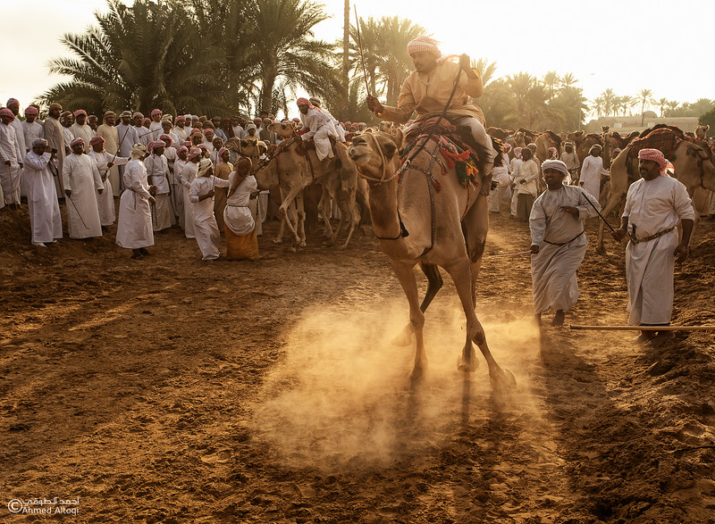 IMGL1953- Camel Race.jpg