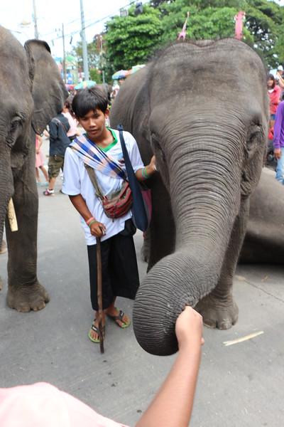 2014-11-14 Surin Elephant Welcome Feast 743.JPG