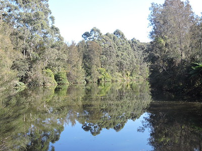 Lane Cove National Park, Sydney, NSW - Australia
