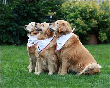 Cobourg Canines