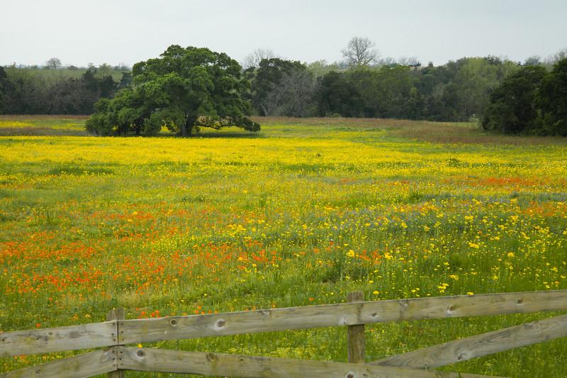 2015_4_3 Texas Wildflowers-7571.jpg