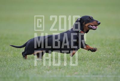 dachshund-mimi