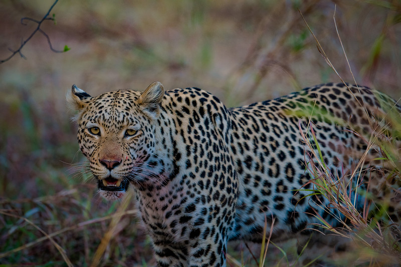 Botswana_June_2017 (3122 of 6179).jpg