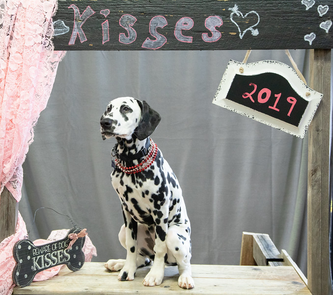GDU Kissing Booth 2019-21.jpg