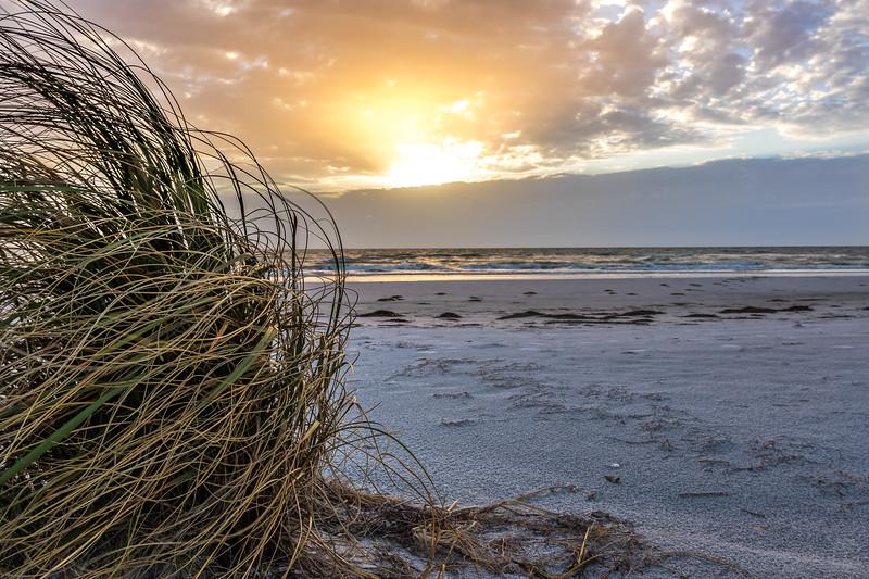 Sea oats at golden hour