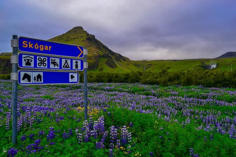 Guð skapaði þetta