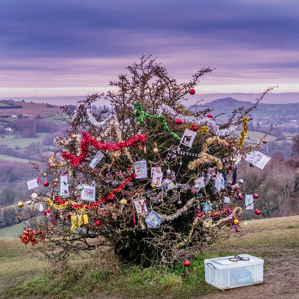 Dog's Christmas Tree-7795.jpg