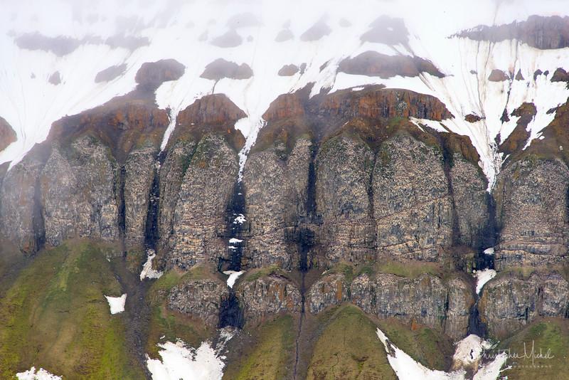 Cape Flora Franz Josef.jpg