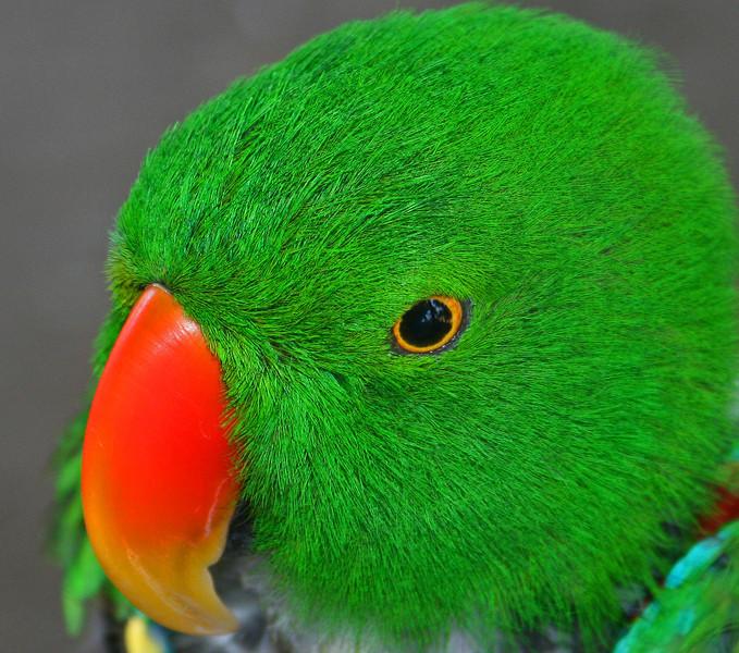 parrot (2).jpg